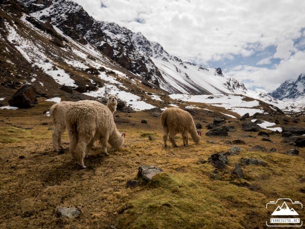 ivan-digital-ausangate-fotografia-viajes-naturaleza-aventura-31